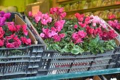 Fiori rosa del mercato Fotografia Stock Libera da Diritti