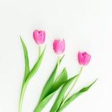 Fiori rosa del tulipano su fondo bianco Disposizione piana Vista superiore Fotografie Stock Libere da Diritti