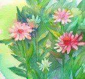 Fiori rosa dell'acquerello Fotografia Stock Libera da Diritti