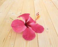 Fiori rosa dell'ibisco su un pavimento di legno Fotografia Stock