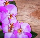 Fiori rosa dell'orchidea su cenni storici di legno Immagine Stock Libera da Diritti