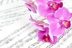 Fiori rosa dell'orchidea sullo strato di musica Fotografia Stock Libera da Diritti