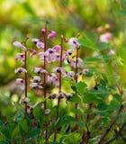 Fiori rosa della foresta fotografie stock libere da diritti