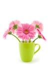 Fiori rosa della gerbera Immagine Stock