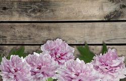 Fiori rosa della peonia su fondo di legno Fotografia Stock Libera da Diritti