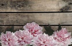 Fiori rosa della peonia su fondo di legno Fotografie Stock Libere da Diritti
