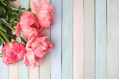 Fiori rosa della peonia sulla tavola di legno di colori del pastl fondo di nozze o di festa della mamma con lo spazio della copia immagine stock