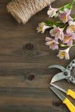 Fiori rosa di Alstromeria su fondo di legno con gli strumenti floristici del giardino ed il bordo floreale rustico del cavo Immag Immagini Stock Libere da Diritti