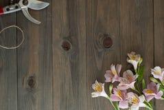 Fiori rosa di Alstromeria su fondo di legno con gli strumenti floristici del giardino ed il bordo floreale rustico del cavo Immag Immagini Stock