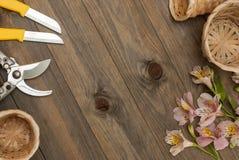 Fiori rosa di Alstromeria su fondo di legno con gli strumenti floristici del giardino ed il bordo floreale rustico del cavo Immag Fotografia Stock