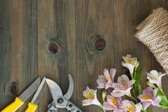 Fiori rosa di Alstromeria su fondo di legno con gli strumenti floristici del giardino ed il bordo floreale rustico del cavo Immag Immagine Stock Libera da Diritti