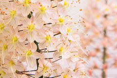 Fiori rosa di fragilità Fotografie Stock Libere da Diritti