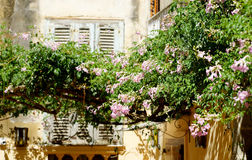 Fiori rosa di Tropea Fotografie Stock