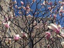 Fiori rosa e prospettiva della costruzione Fotografie Stock Libere da Diritti