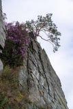 Fiori rosa e un albero sull'orlo della scogliera contro il cielo immagini stock