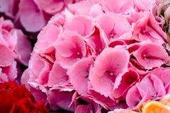 Fiori rosa in fioritura dopo una doccia di pioggia fotografia stock libera da diritti
