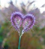 Fiori rosa in forma di cuore Fotografia Stock Libera da Diritti