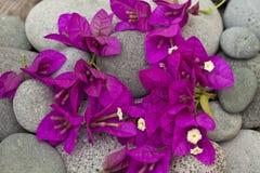 Fiori rosa luminosi della buganvillea fotografia stock libera da diritti