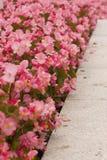 Fiori rosa, materiale del letto di fiore fotografia stock