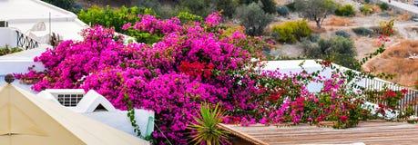 fiori rosa nel tetto della casa tradizionale in Lindos fotografie stock libere da diritti