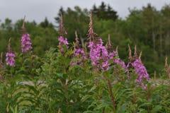 Fiori rosa nella foresta Fotografia Stock Libera da Diritti
