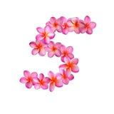 Fiori rosa numero cinque di plumeria Fotografia Stock Libera da Diritti