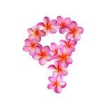 Fiori rosa numero nove di plumeria Immagine Stock Libera da Diritti