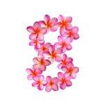 Fiori rosa numero otto di plumeria Immagine Stock