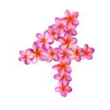 Fiori rosa numero quattro di plumeria Immagine Stock Libera da Diritti