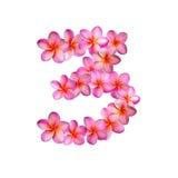 Fiori rosa numero tre di plumeria Immagini Stock