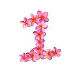 Fiori rosa numero uno di plumeria Immagini Stock