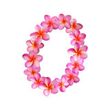 Fiori rosa numero zero di plumeria Immagini Stock