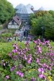 Fiori rosa a Nunobiki Herb Garden sul supporto Rokko a Kobe, Giappone Fotografie Stock Libere da Diritti
