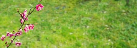 Fiori rosa su un fondo di erba immagine stock libera da diritti