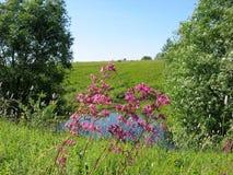 Fiori rosa su un fondo di uno stagno fotografia stock