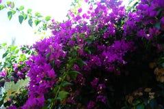 Fiori rosa sul cielo immagini stock