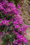 Fiori rosa in un parco Fotografie Stock