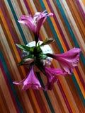 Fiori rosa in un vaso bianco Fotografia Stock
