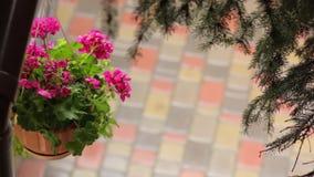 Fiori rosa in vaso di fiore video d archivio