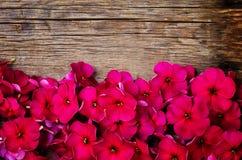 Fiori rossi Immagine Stock