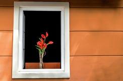 Fiori rossi alla parete bianca dell'arancia del briciolo della finestra fotografia stock