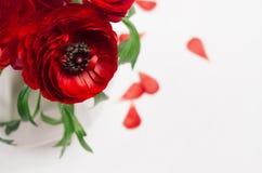 Fiori rossi appassionati in vaso bianco con il primo piano dei petali su fondo di legno Priorità bassa floreale della sorgente immagini stock libere da diritti