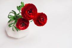Fiori rossi appassionati in vaso bianco su fondo di legno Concetto di giorno di S. Valentino per progettazione fotografia stock libera da diritti