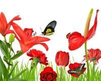 Fiori rossi con le farfalle e la coccinella Fotografie Stock Libere da Diritti