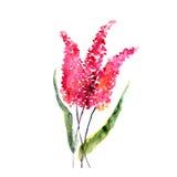 Fiori rossi Decorazione floreale dell'acquerello Mazzo floreale Priorità bassa floreale Scheda di compleanno Immagini Stock Libere da Diritti