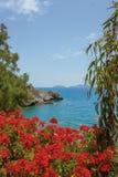 Fiori rossi dei gerani, isola di Creta Fotografia Stock