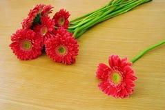 Fiori rossi del gerbera Fotografie Stock