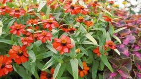 Fiori rossi del giardino archivi video