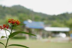 Fiori rossi dell'erba nell'inverno fotografia stock