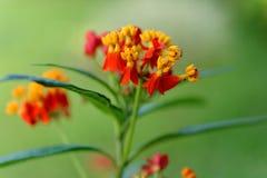 Fiori rossi dell'erba nell'inverno fotografia stock libera da diritti